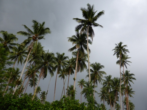 Coconut plantations played such a part in the development of these islands