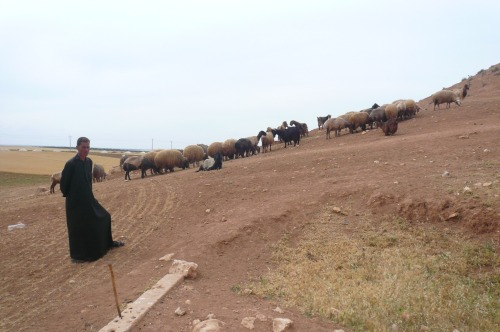 159. Shepherd or salesman at Ebla