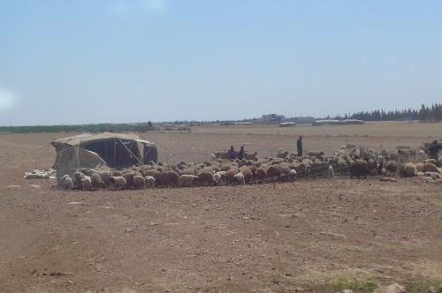 Bedouins on the road to Kadesh