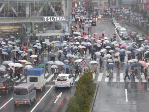1.000 people are said to cross every time the lights change at this intersection outside Shibuya station
