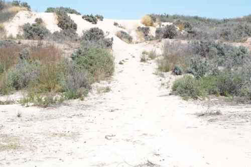 The back of the dune as it moves westward